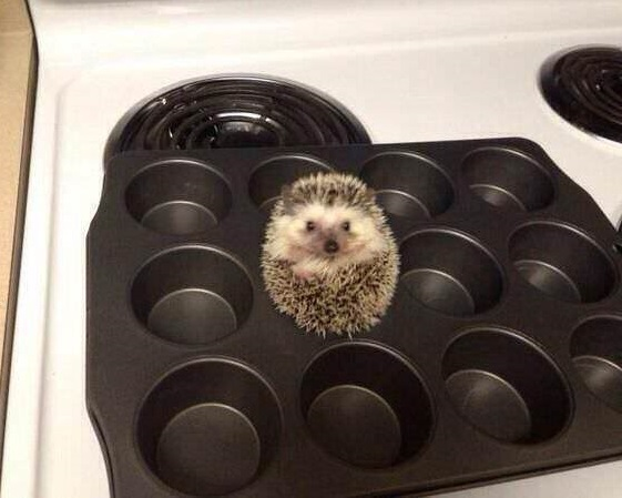 Look dudes, I'm a muffin !