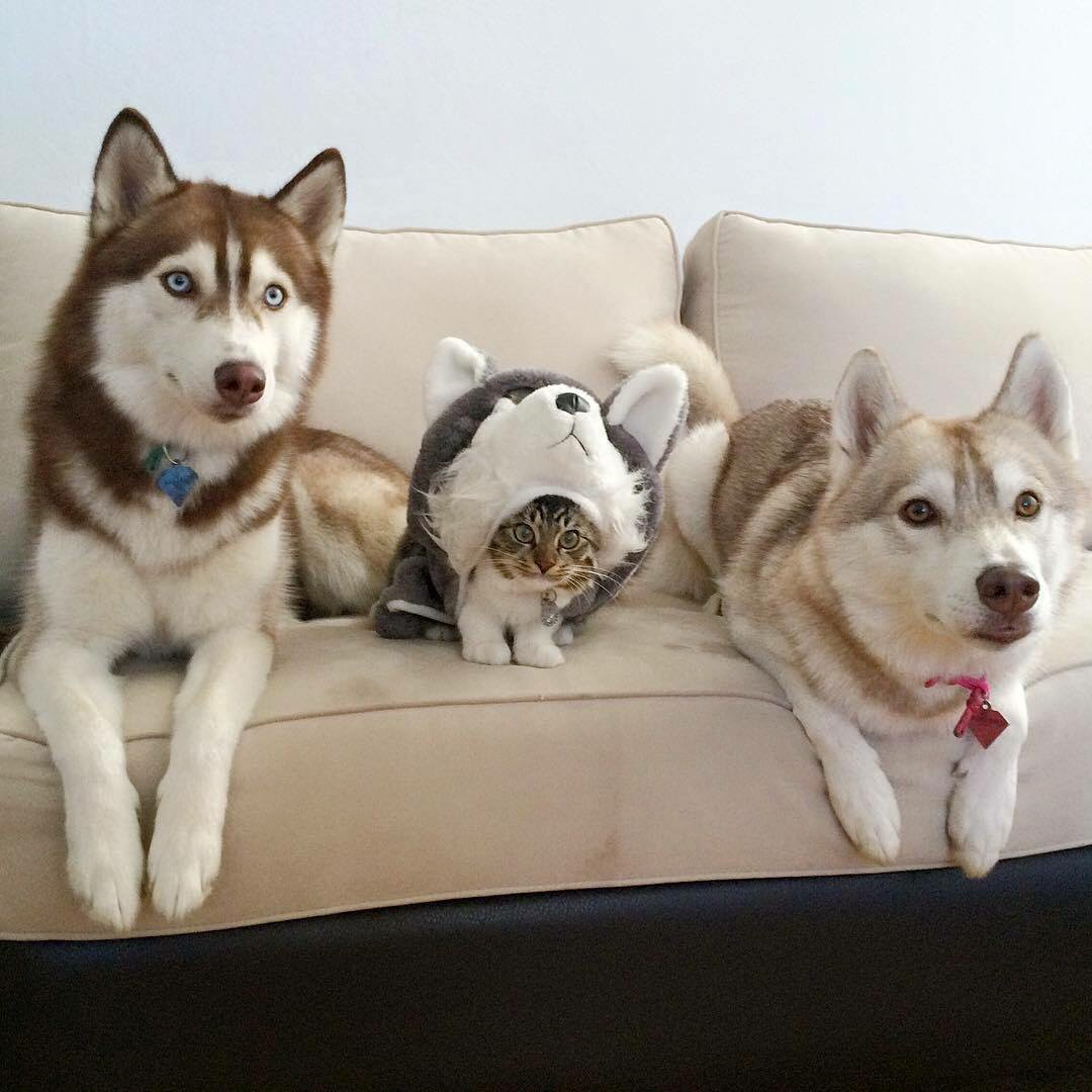 Day 12, they still think I'm a husky