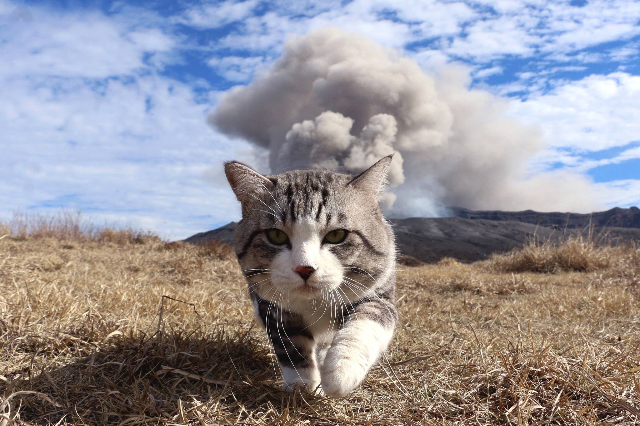 Cool cats don't look at explosions