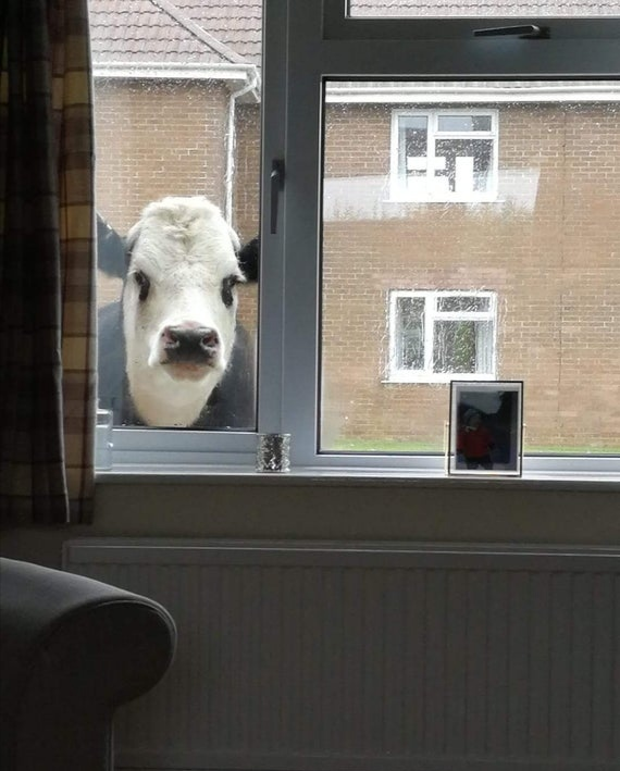 hey psst wanna buy some milk