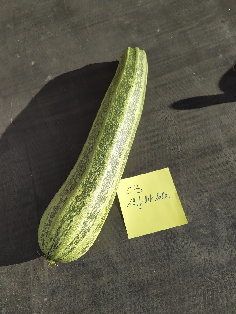 Ma grosse courgette...