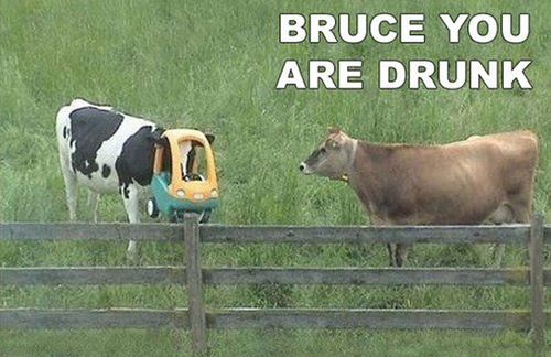 Go home bruce